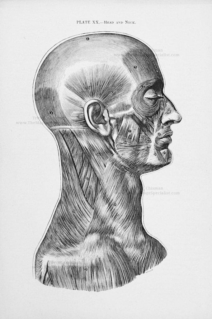Artistic Anatomy Plate 20