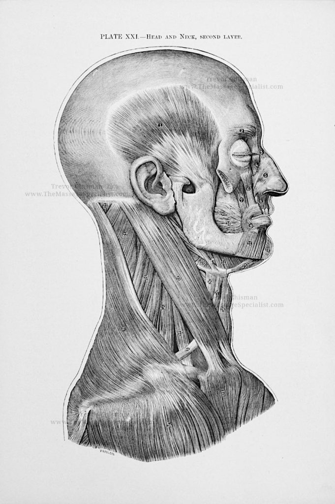 Artistic Anatomy Plate 21