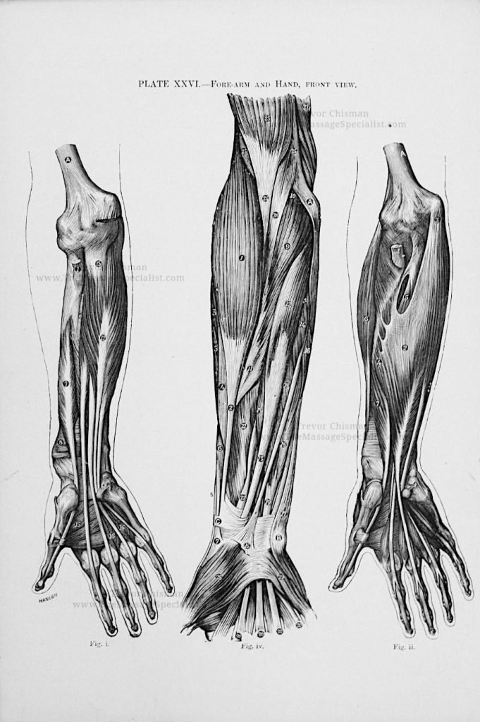Artistic Anatomy Plate 26