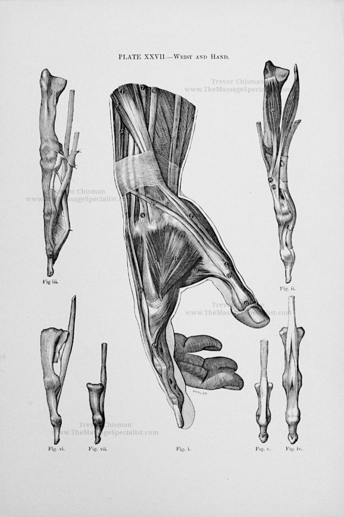 Artistic Anatomy Plate 27