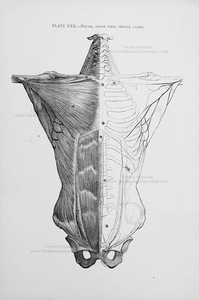 Artistic Anatomy Plate 30