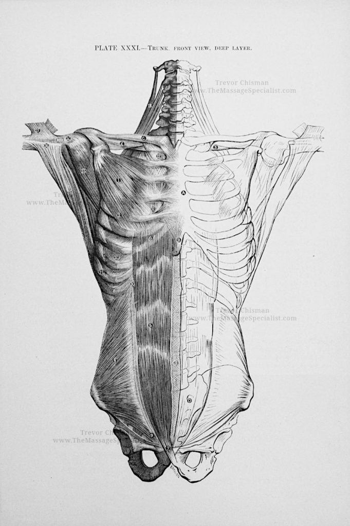 Artistic Anatomy Plate 31