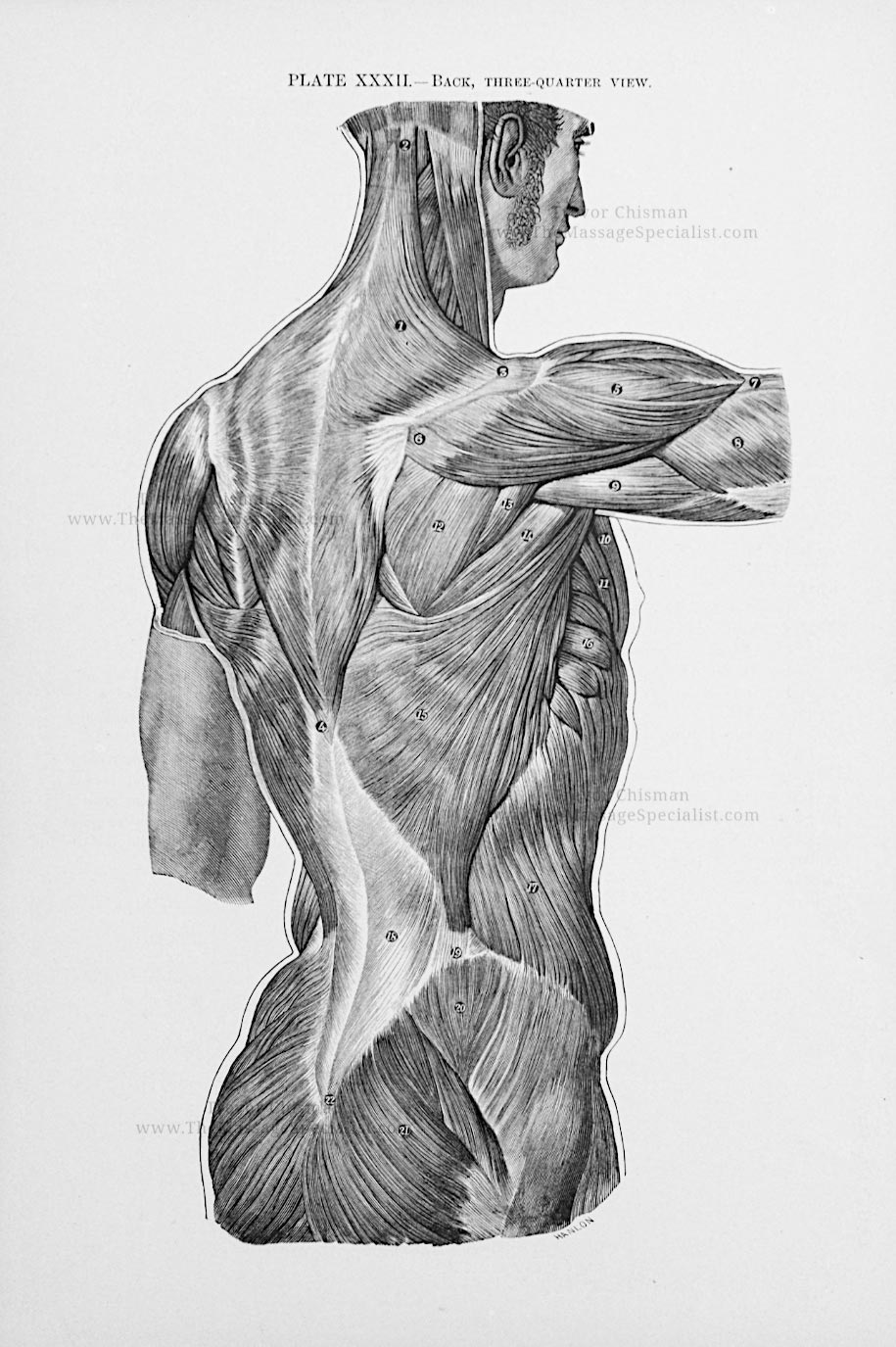 Artistic Anatomy Plate 32