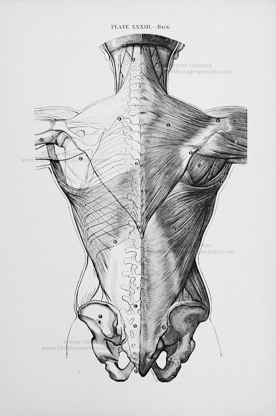 Artistic Anatomy Plate 33
