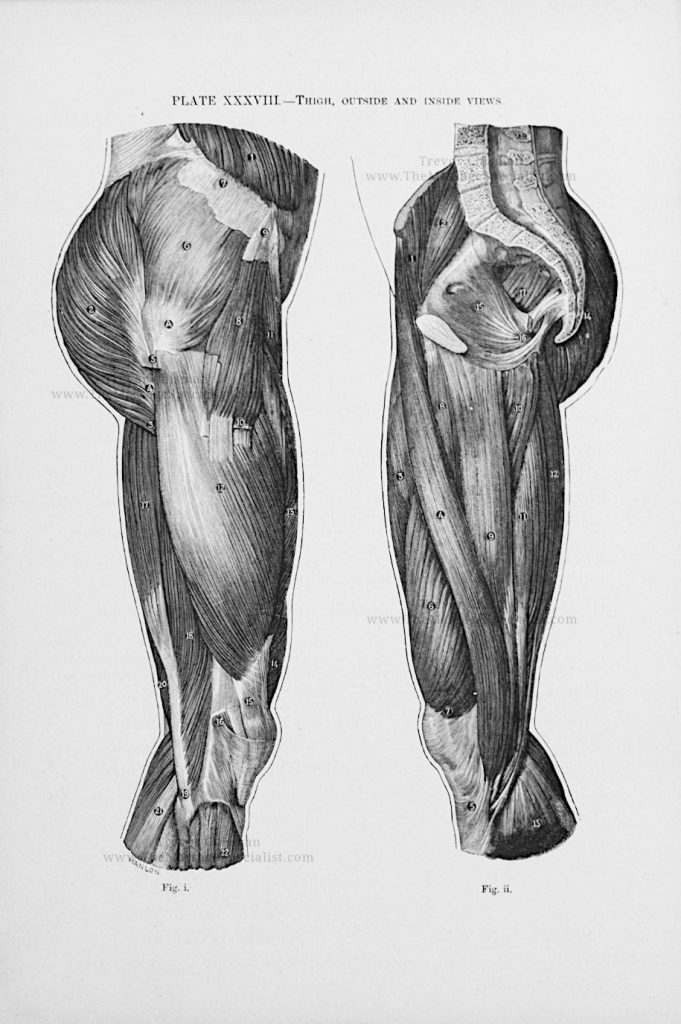 Artistic Anatomy Plate 38