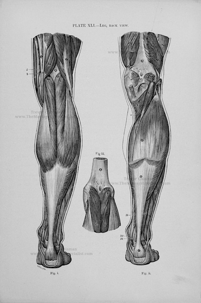 Artistic Anatomy Plate 41