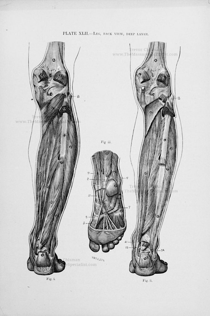 Artistic Anatomy Plate 42