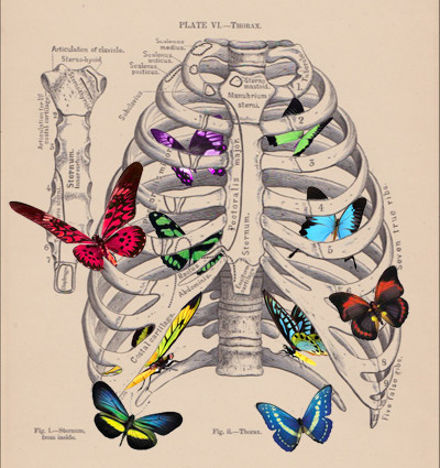 Thoracic Butterflies Breathing